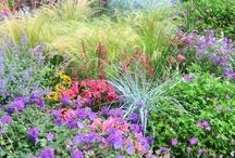 garden coolness / by Nancy Wilkins