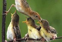 Birds / by Kim Hochman Aguayo