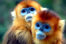 Primates / by Gullringstorpgoatgal Sweden