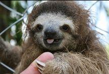 Sloths / by Gullringstorpgoatgal Sweden