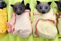 Bats / by Gullringstorpgoatgal Sweden