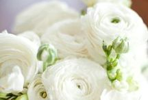 The Wedding / by Lynn Nguyen