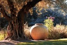 Outdoor Space / by Brenda Holland
