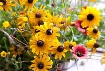 flowers:  Plants & Potting,  Flowers & Arrangements / by Brenda Holland