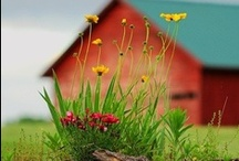 Barns and Farms! / by Wendy Boothby