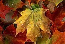 Autumn Leaves! / by Wendy Boothby