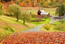 I Love Autumn / by Catherine Drew