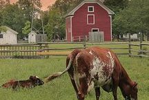 Country Living! / by Wendy Boothby