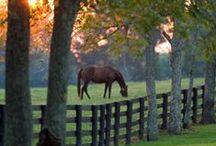Fences and Gates! / by Wendy Boothby