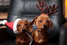 I Love Christmas  / by Catherine Drew