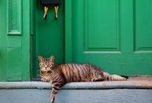 I Love Doorways / by Catherine Drew