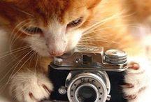 Camera's & Friends / by Catherine Drew