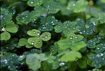 I Love St. Patrick's Day / by Catherine Drew