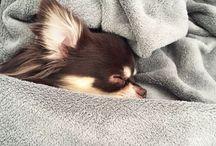 Puppy life / Mon petit Mopy ♡