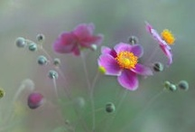 Enchanting Flowers / by Beth Trask