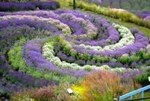Fields of flowers / by Beth Trask