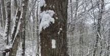Winter on the Appalachian Trail / Winter is a beautiful time to enjoy the Appalachian Trail!