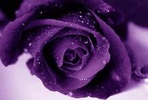 ❁ Secret Garden ❁ / Earth laughs in flowers.      ~ Ralph Waldo Emerson