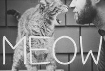 Meow. / Cats. Cats. Cats. Cats.