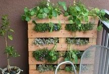 +HOW DOES YOUR GARDEN GROW / gardening tips, tools,'inspiration and ideas