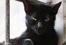Black Cat / by Shannon Winters