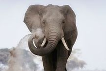 Elephance / Nature's great masterpiece, an elephant; the only harmless great thing.