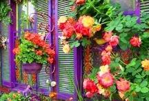 Fabulous Colour / by Aurelia May Valentina