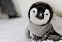 cute to the max! / by Jen Lellig