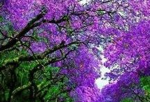 Purple Pultritude