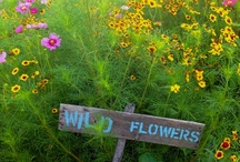 Wildflowers / by Julia Marriott