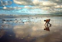 Beachcombers / by Julia Marriott