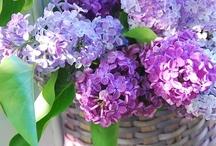 Lilacs / by Julia Marriott
