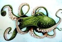 Octopi / by Julia Marriott