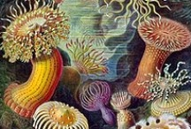 Jellyfish & Sea Anemones / by Julia Marriott