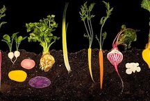 Can't Get Enough Veggies / by Julia Marriott