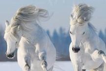Etc/Snowfall / by Alexandra Smith