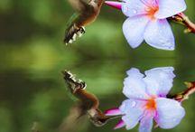 Humming birds / Sweet things / by Elle B. Speeks