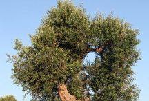 Old trees / Nature / by Elle B. Speeks