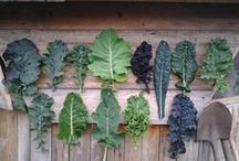 Outside   Growing / Gardening in all its many varieties! Plants, soil, composting, irrigation, insects, inside growing.