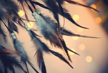 ::feathers:: / I love feathers! / by April Ewing