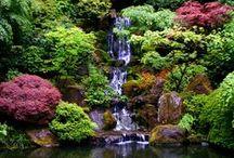 Oriental Gardens & Outdoors  / Love IT
