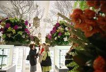 David Jones Flower Show - Attraction / #davidjones #flower #spring #summer #floral #seed #attraction