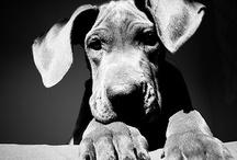 Four paws / by Kinia Buenosdias