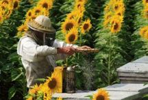 Beekeeping / Beekeeping with an emphasis on naturally healthy methods