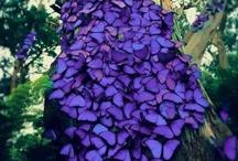 Butterflies / by Gail Cherry