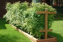 Gardening / Here I'm sharing my gardening projects, tips and resources.   http://practicalsavings.net/practical-living/gardening/