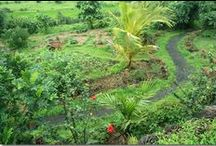 Permaculture, Food Forests & Aquaculture