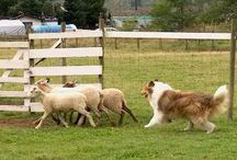 Herding the Flock / by Wendy W