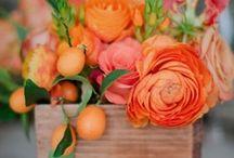 Shades of Orange, Peach, Coral