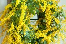 Shades of Yellow, Lemon, Sunshine